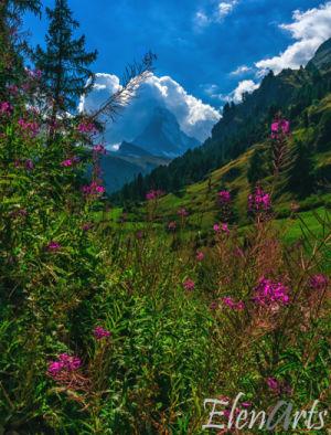 zermatt_landscape_flowers_Lr_better_logo